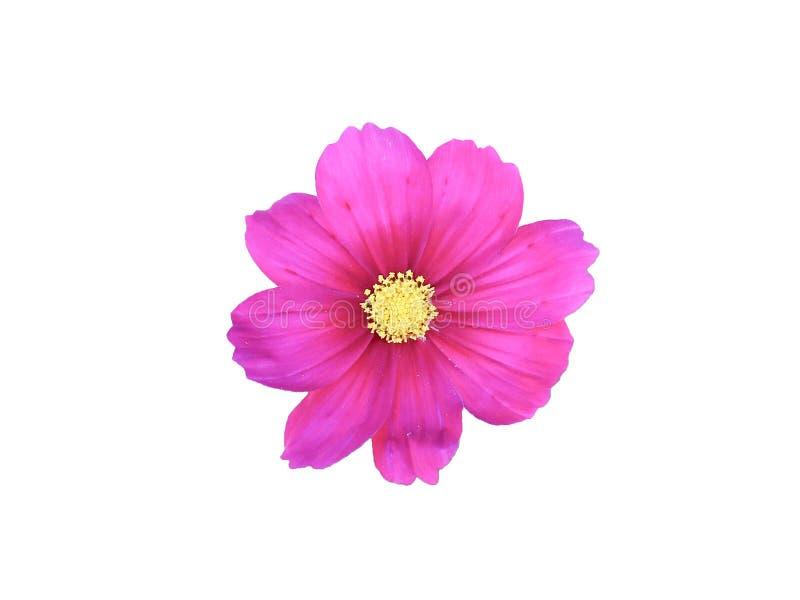 Roze bloemen op een witte achtergrond stock fotografie