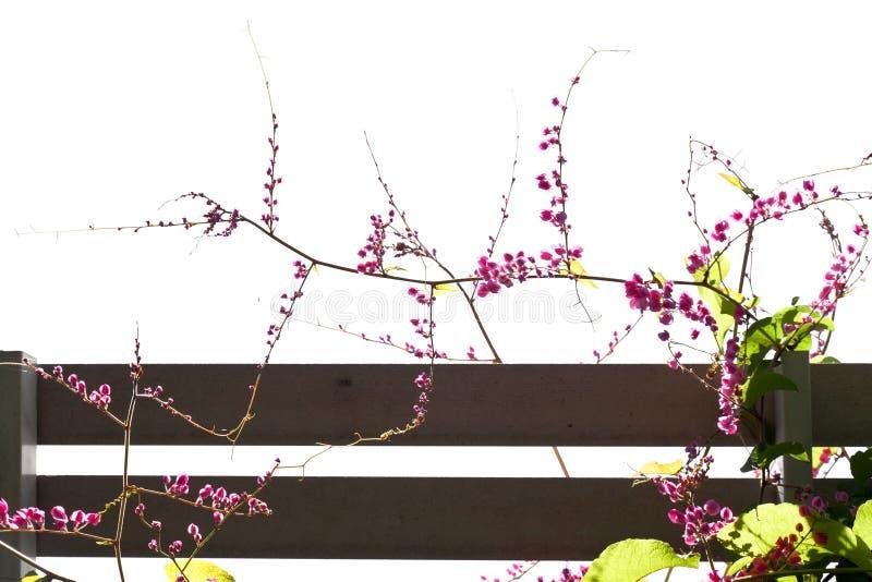 Roze bloemen op omheining stock foto