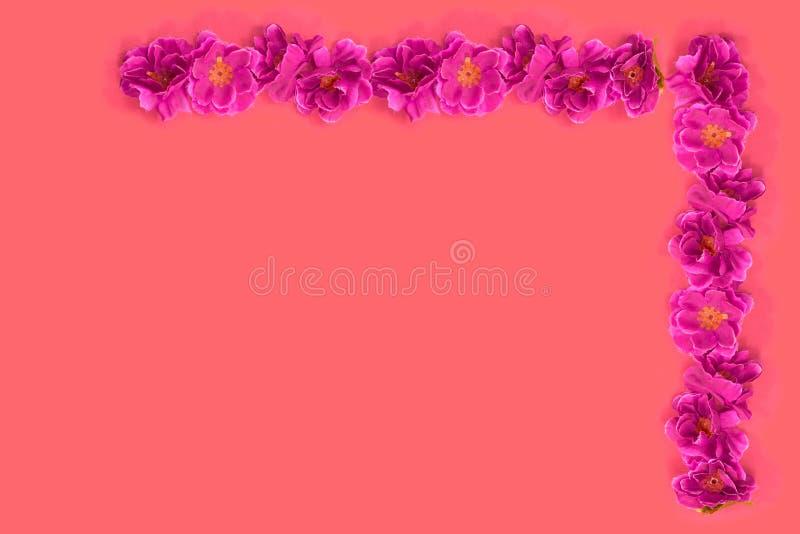 Roze bloemen op rode achtergrond royalty-vrije stock afbeeldingen