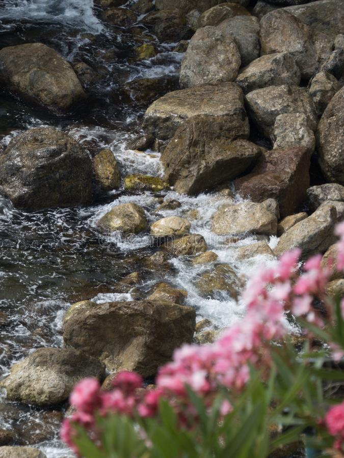 Roze bloemen op rotsen: nadruk op de rotsen royalty-vrije stock foto's