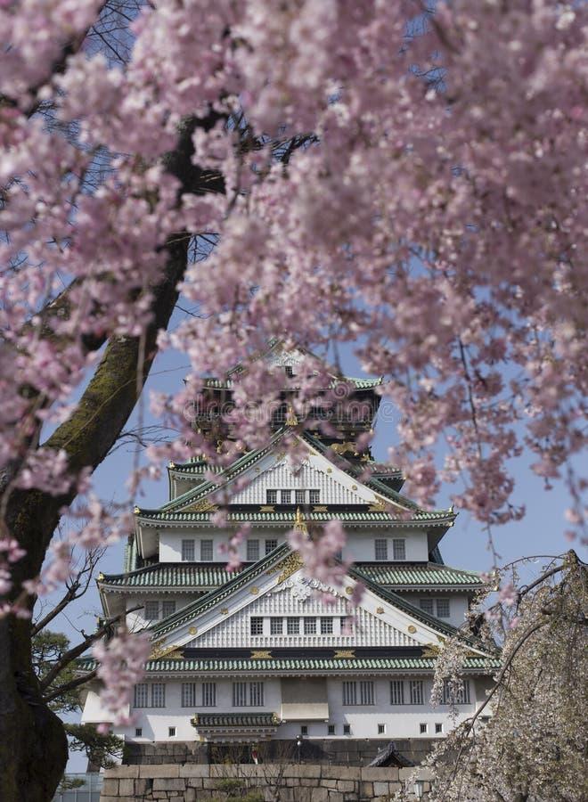 Roze bloemen van de kersenbloesems en achter Osaka Castle in Japan stock foto's