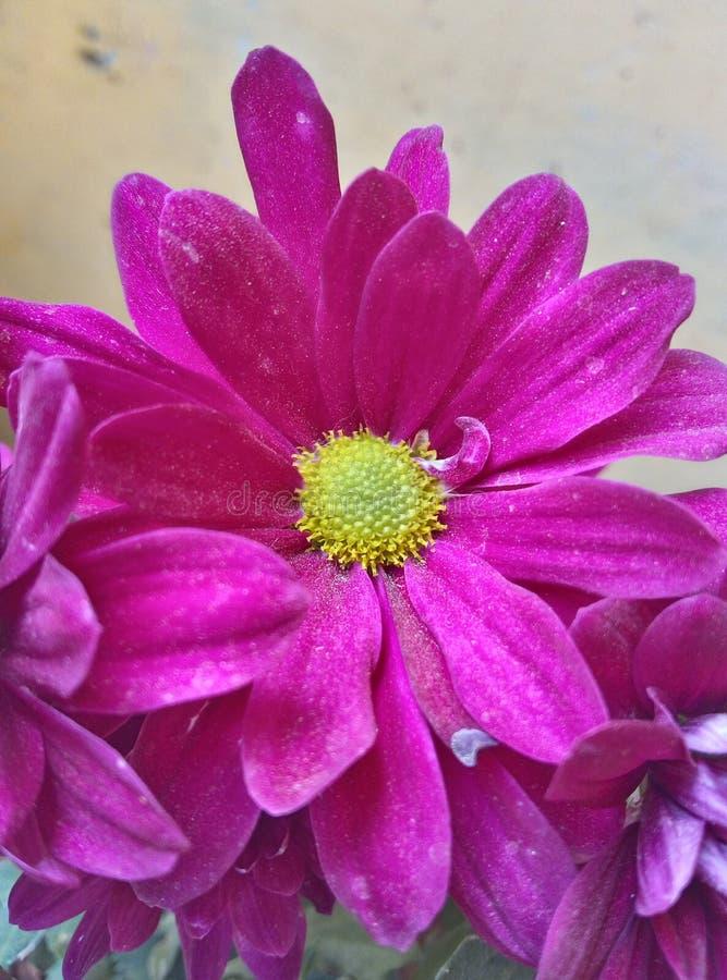 Roze Bloemenboeketten royalty-vrije stock fotografie