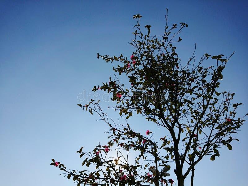 Roze bloemenboom royalty-vrije stock foto