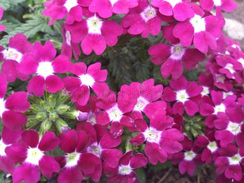 Roze bloemenbos met roze en witte elft stock fotografie