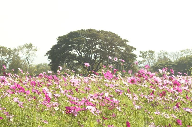 Roze bloemgebied royalty-vrije stock afbeelding