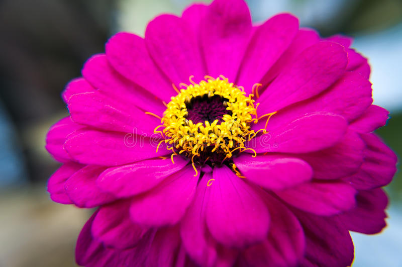 Roze bloemmacro royalty-vrije stock afbeelding