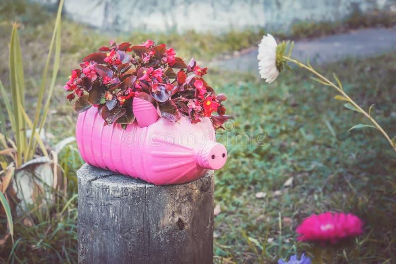 Roze bloempot in de vorm van een varken van een plastic fles stock foto's