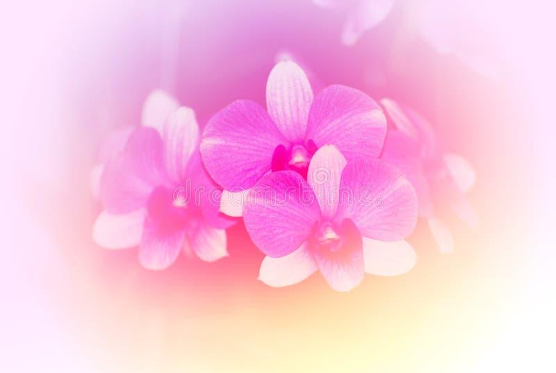 Roze bokeh en achtergrond stock foto's