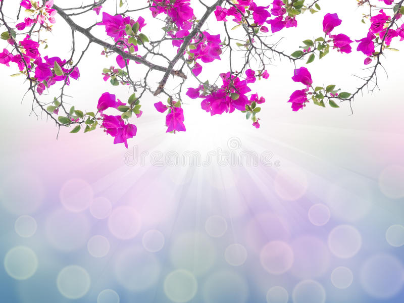 Roze bougainvilleabloem stock illustratie