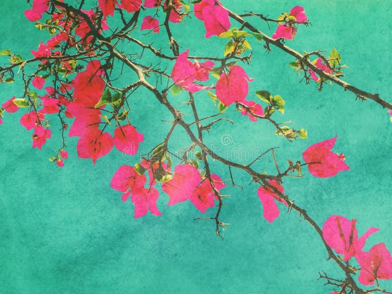 Roze bougainvilleabloem royalty-vrije illustratie