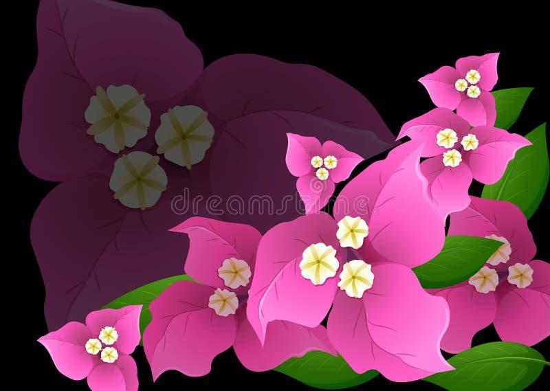 Roze bougainvilleabloemen op zwarte achtergrond vector illustratie
