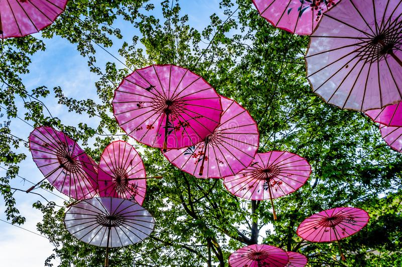 Roze Chinese Paraplu's of Parasols onder een boomluifel in Yale Town stock foto's