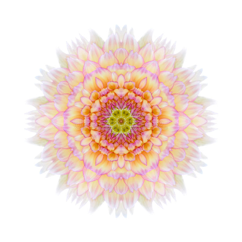 Roze Concentrische Chrysant Mandala Flower Isolated royalty-vrije stock foto
