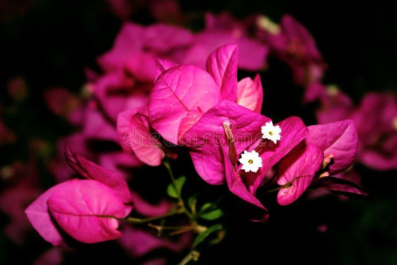 Roze confettien royalty-vrije stock afbeelding