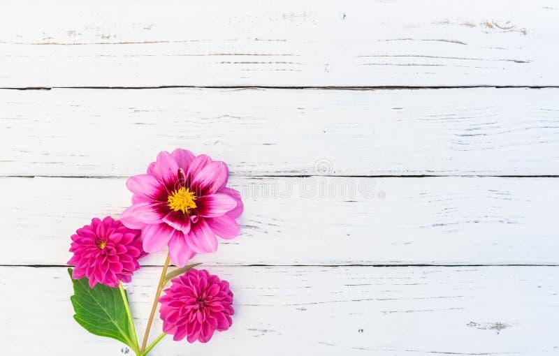 Roze Dahlia Flowers Bouquet royalty-vrije stock afbeelding