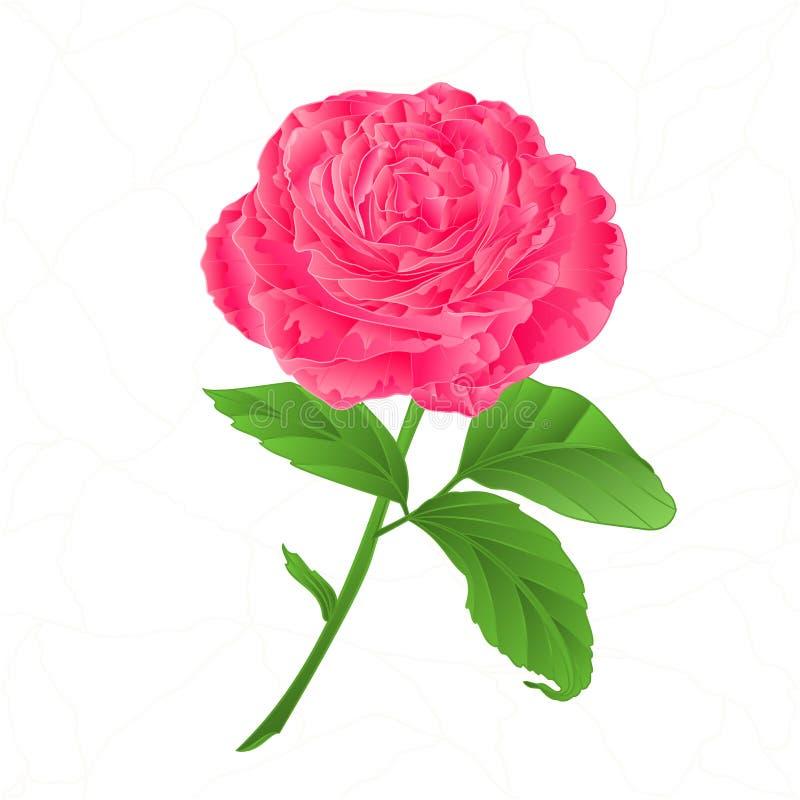 Roze de bloem nam barsten in de porselein uitstekende vector toe stock illustratie