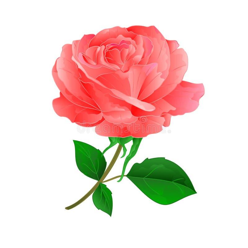 Roze de bloem nam op een witte uitstekende vector toe als achtergrond vector illustratie