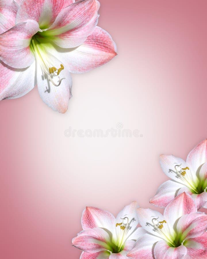 Roze de bloemenGrens van de amaryllis stock illustratie