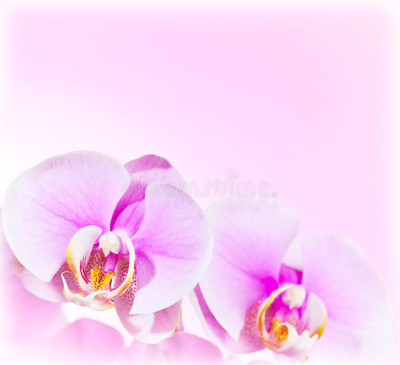Roze de bloemgrens van de Orchidee royalty-vrije stock foto
