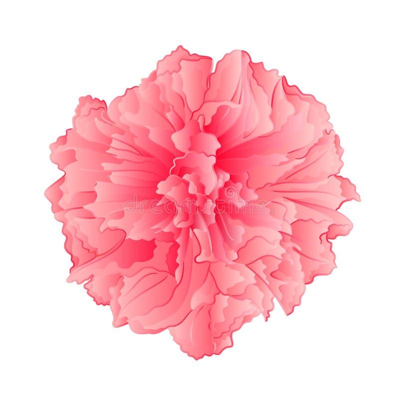 Roze de bloemvector van bloemsakura vector illustratie