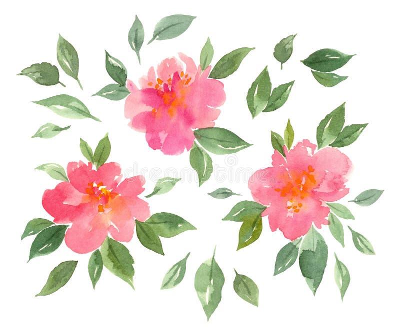 Roze de pioenenbloemen van de waterverfbloesem royalty-vrije stock foto's