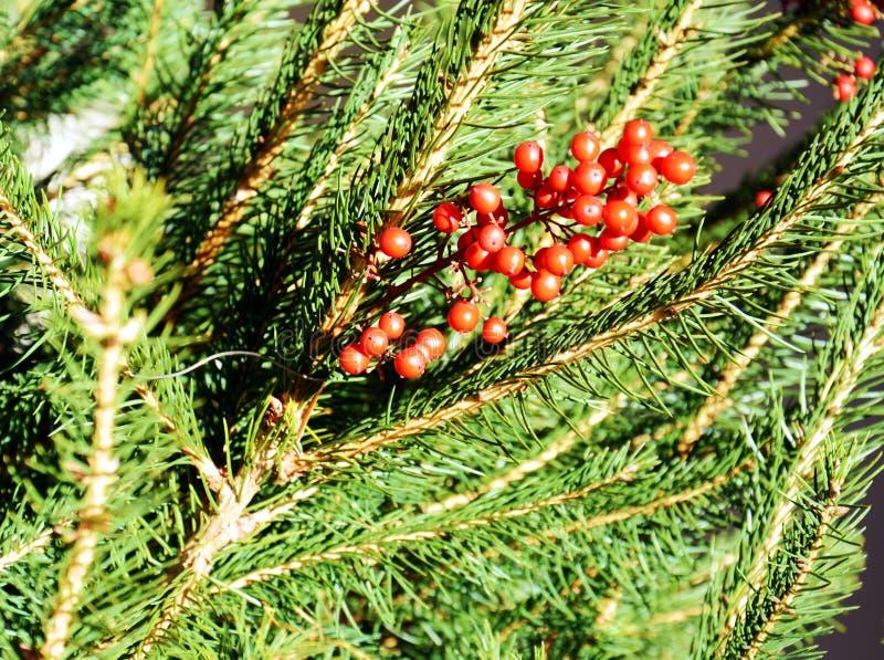 Roze de winterbloemen en groene bladeren, natuurlijke achtergrond stock fotografie