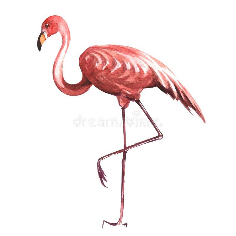 Roze die flamingo op witte achtergrond wordt geïsoleerd royalty-vrije illustratie