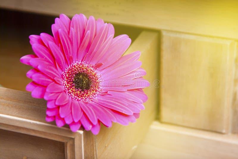 Roze die het madeliefjebloem van fucsiagerbera op houten lijst met exemplaarruimte wordt geïsoleerd gestemd Uitstekende stijl royalty-vrije stock foto's