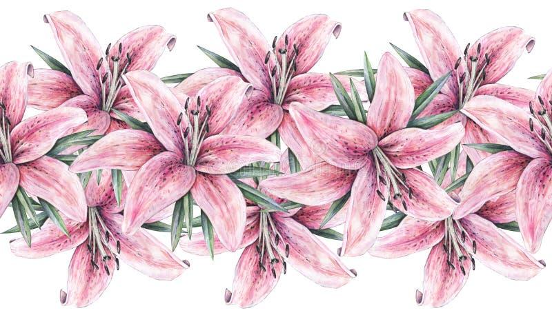 Roze die leliebloemen op witte achtergrond worden geïsoleerd Waterverfhandwork illustratie De naadloze grens van het patroonkader royalty-vrije illustratie