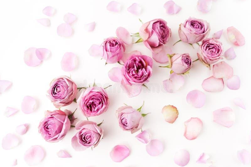 Roze die rozen en bloemblaadjes op witte achtergrond worden verspreid vlak leg, luchtmening stock foto's