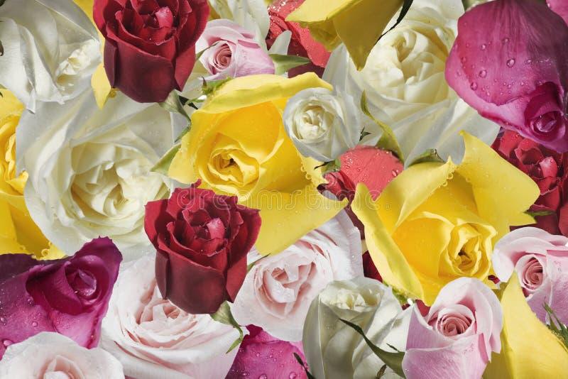 Roze is een bos van rozen stock foto's