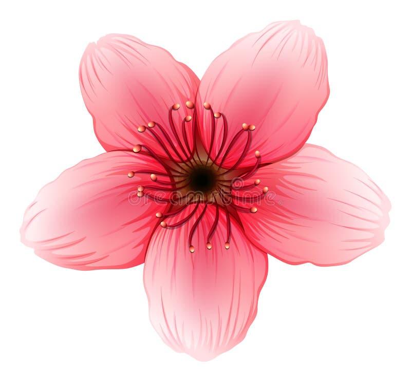 Roze een vijf-bloemblaadje bloem royalty-vrije illustratie