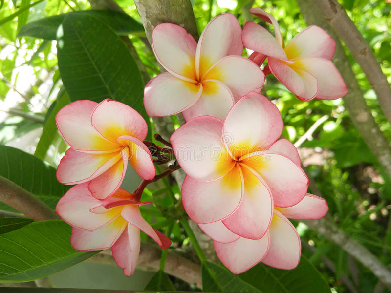 Roze en gele bloemen royalty-vrije stock foto's