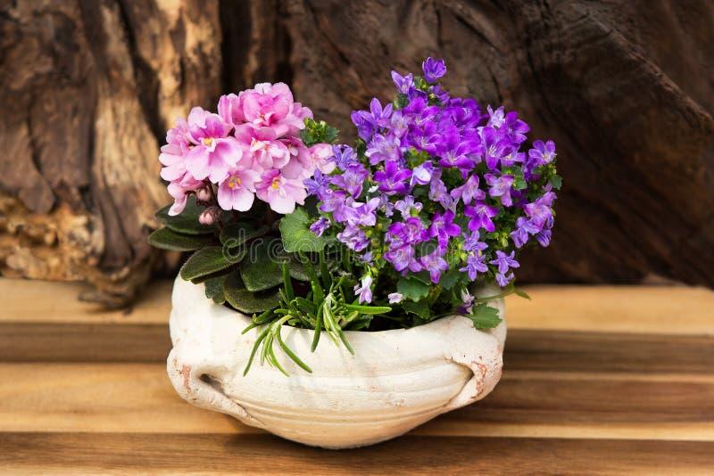 Roze en lilac binnenbloemen met vele bloesems in een aarden pot stock foto