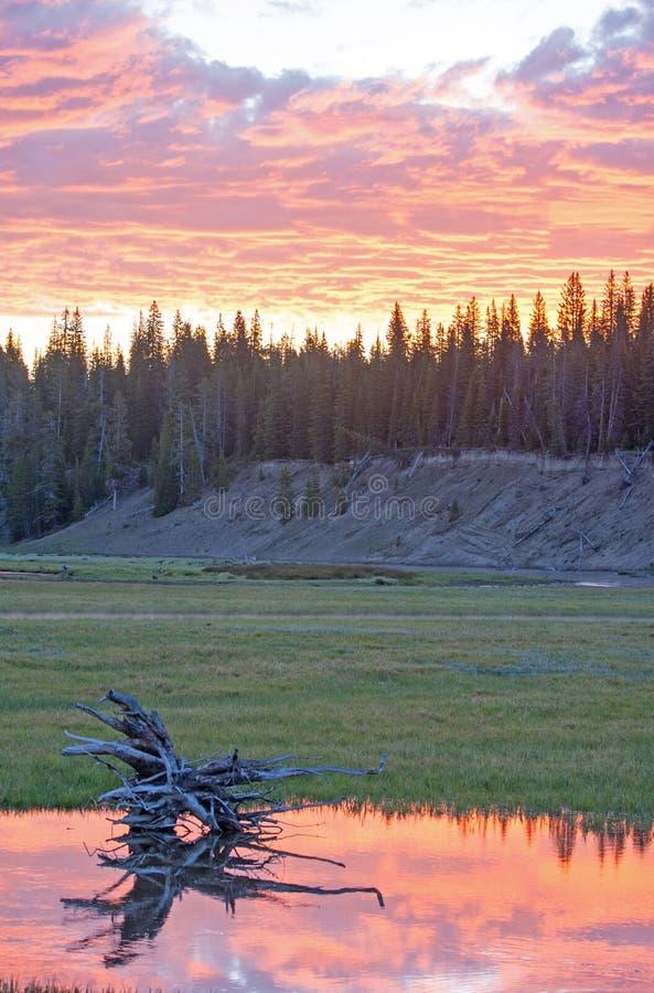 Roze en oranje Zonsopgang cloudscape over Pelikaankreek in het Nationale Park de V.S. van Yellowstone royalty-vrije stock foto