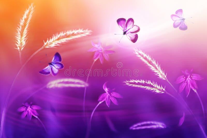 Roze en purpere vlinders tegen een achtergrond van wilde bloemen in purpere en gele tonen De fantastische natuurlijke zomer artis royalty-vrije stock afbeeldingen