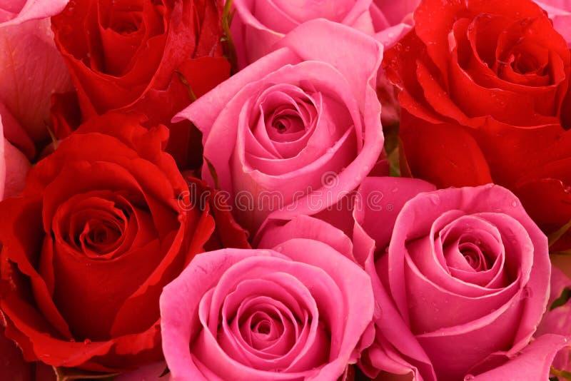 Roze en Rode Rozen royalty-vrije stock afbeeldingen