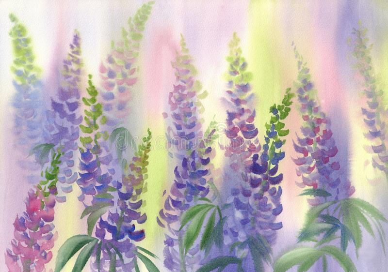 Roze en violette de waterverfachtergrond van lupinebloemen royalty-vrije illustratie