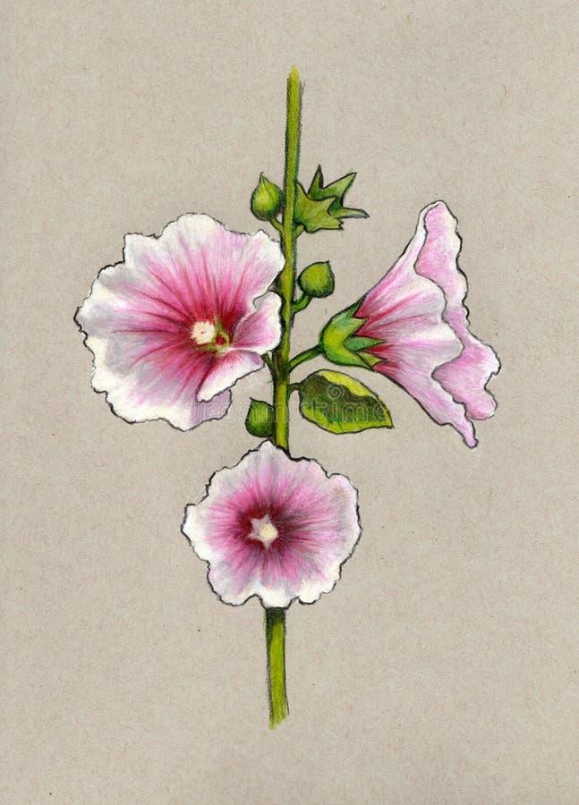 Roze en Whit Hollyhock Flowers, het Art. van het Kleurenpotlood stock illustratie