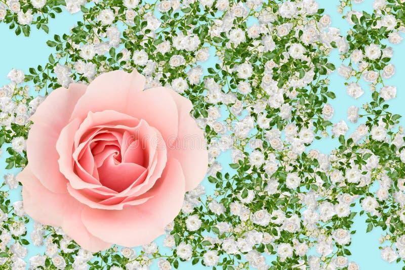Roze en wit nam montering toe stock illustratie