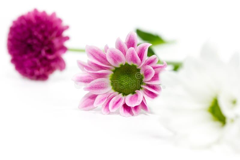 Roze en witte bloemen royalty-vrije stock afbeeldingen