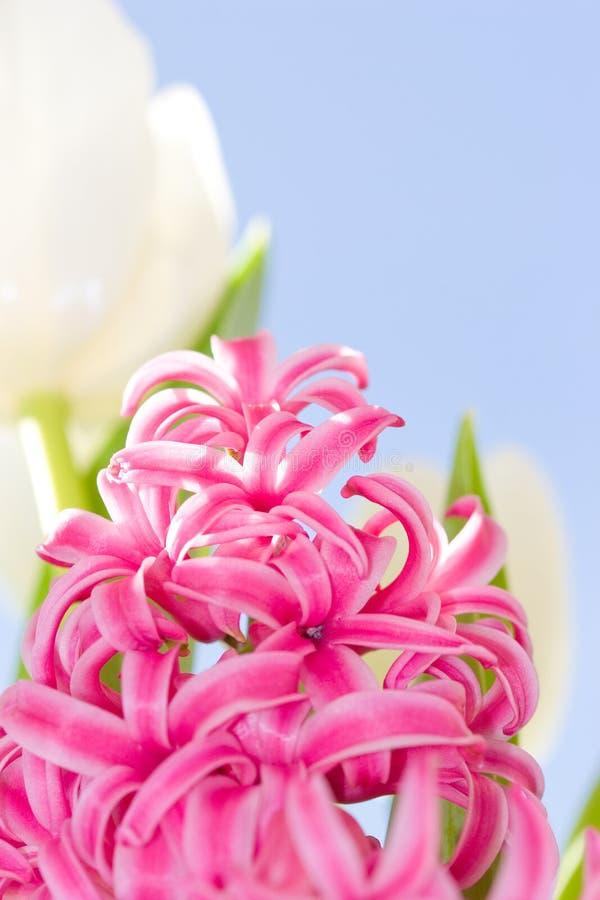 Roze en witte bloemen royalty-vrije stock fotografie