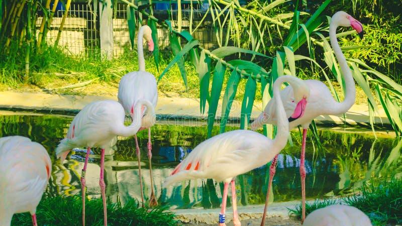 Roze Flamingo in de dierentuin van Cyprus royalty-vrije stock foto