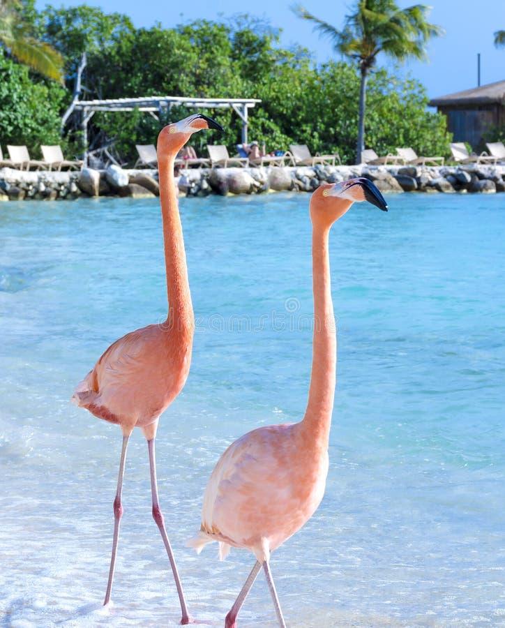 Roze flamingo op het strand stock fotografie