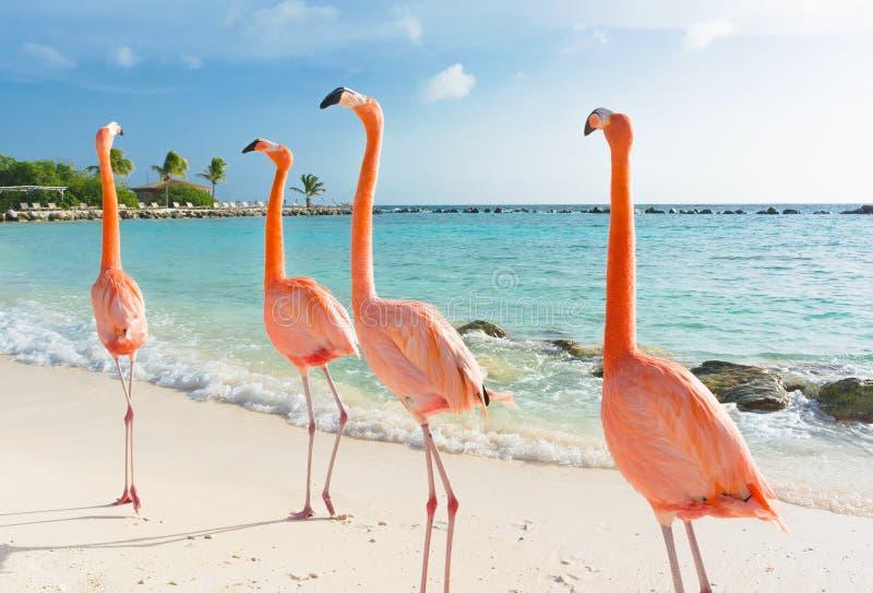 Roze flamingo op het strand stock afbeelding