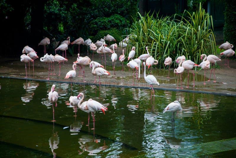 Roze flamingo's in de tuin royalty-vrije stock afbeeldingen