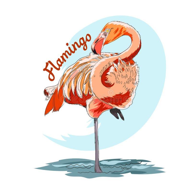 Roze flamingo vectordieillustratie op witte achtergrond wordt geïsoleerd stock illustratie