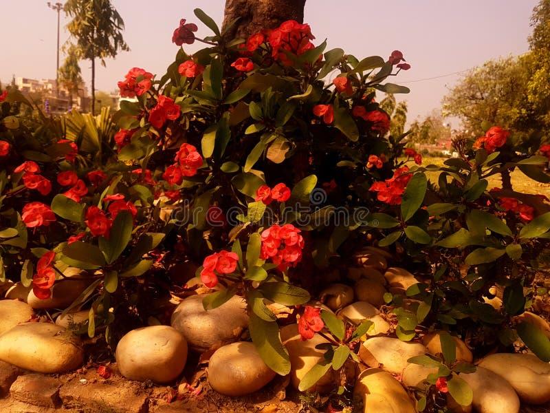 Roze flowe royalty-vrije stock foto