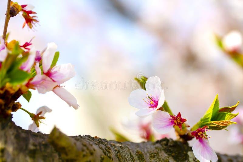 Roze, geel, rood, purper en groen van close-ups in volledige bloesem in volledige glorie met boom van de tak de prachtig kleurrij royalty-vrije stock foto