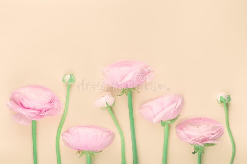 Roze gekleurde pioen of boterbloemenbloemen op perzik royalty-vrije stock foto's